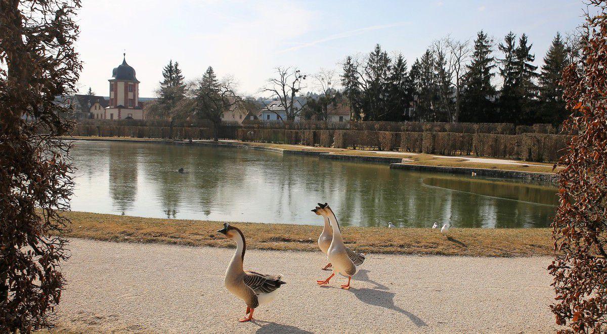Die Wasservögel spazieren nun im Hofgarten an Land.