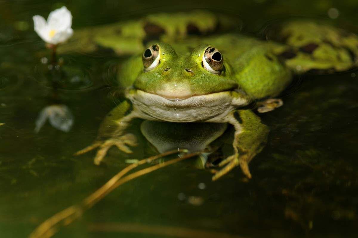 Amphibiens et reptiles