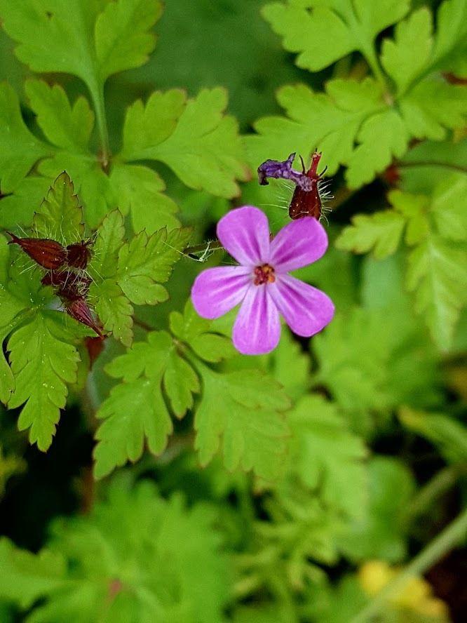 Ces fleurs sauvages dans les chemins de vignes