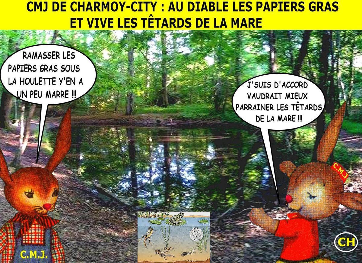 CMJ de Charmoy-City, vive les têtards de la mare