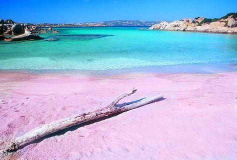 La plage Manddalena Archipelogo en sardaigne