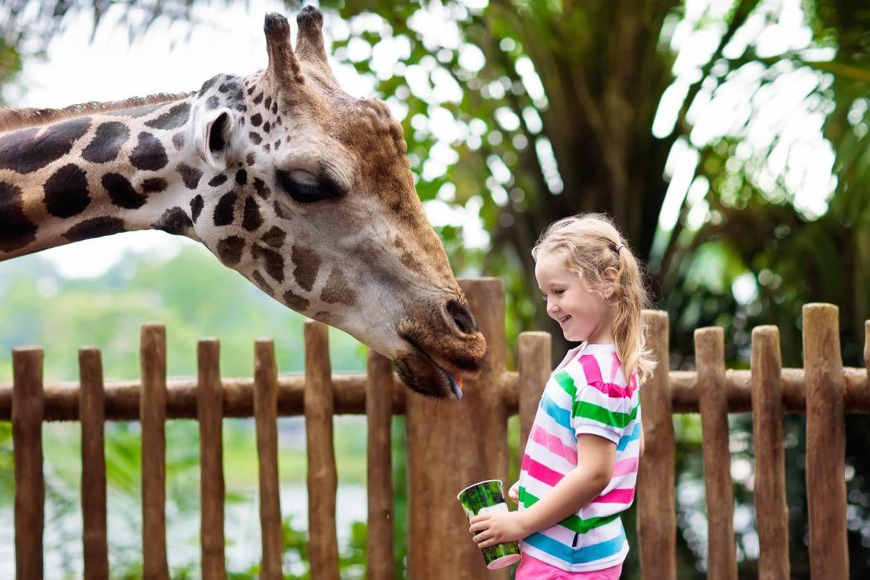 Profitez de vos vacances pour sensibiliser vos enfants à la cause animale