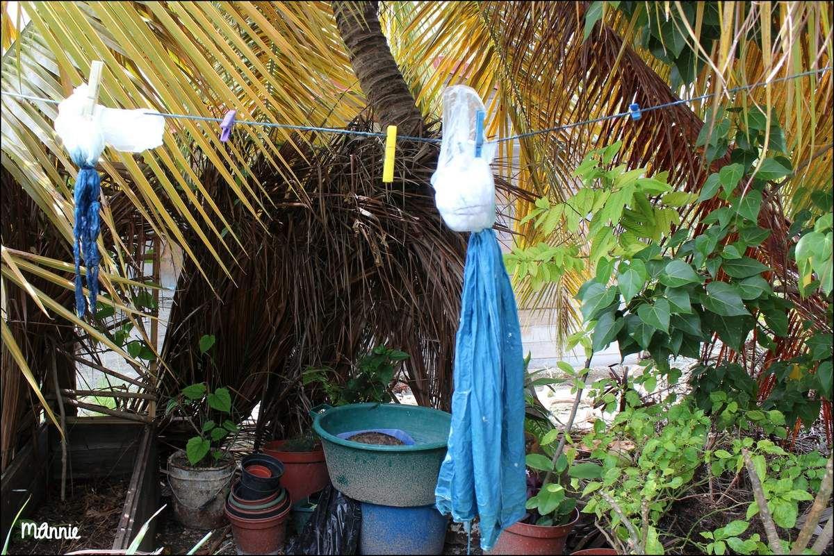 photo prise à la Maison de  l'indigo  à Marie-Galante.  Le tissu est noué et partiellement  trempé dans  un bain d'indigo  pour  un effet tie & dye puis  mis  à sécher sur  un fil à linge..