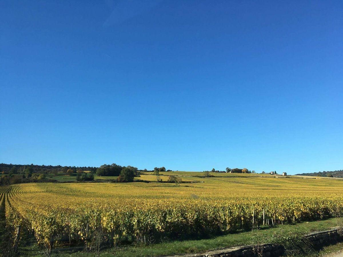 Faux goûts dans les blancs de Bourgogne, faisons le point (oxydation, réduction...). Lettre à ceux qui imaginent que les notes d'elevage peuvent être qualitatives.
