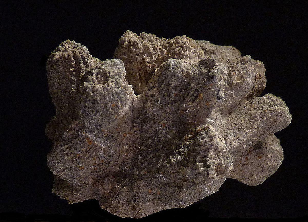 holcospongia-spongiaires-villers sur mer-oxfordien