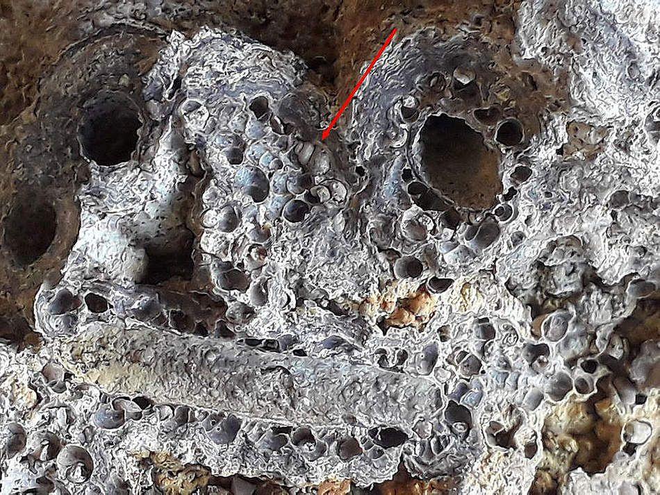 Stromatolites (suite).