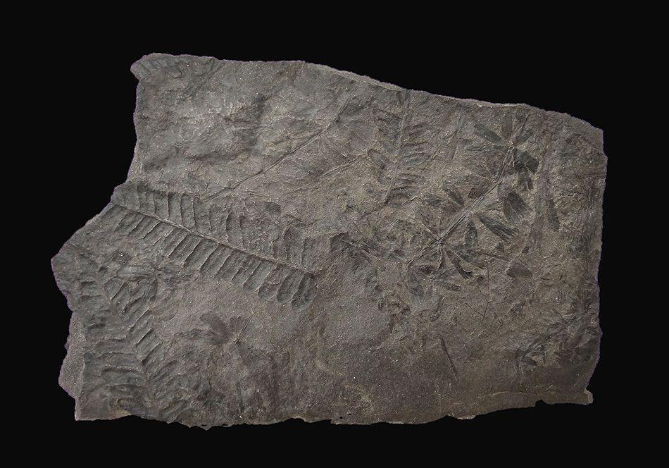 Carbonifère de Graissessac