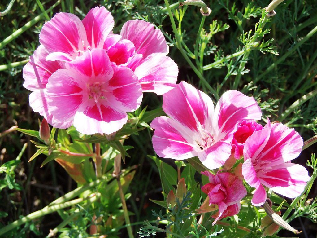 Des couleurs, ... des couleurs, ... et encore des couleurs au jardin des fleurs.