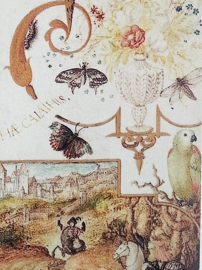 Joris Hoefnagel, insectes et perroquet, in Allégorie aux deux Nymphes avec les vues de Munich et de Landshut (1579) , in Vignau-Wilberg 2006.