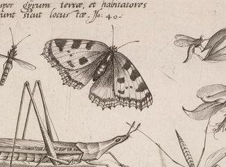 Aglais urticae,  planche I,4 de l'Archetypa studiaque intacte, détail