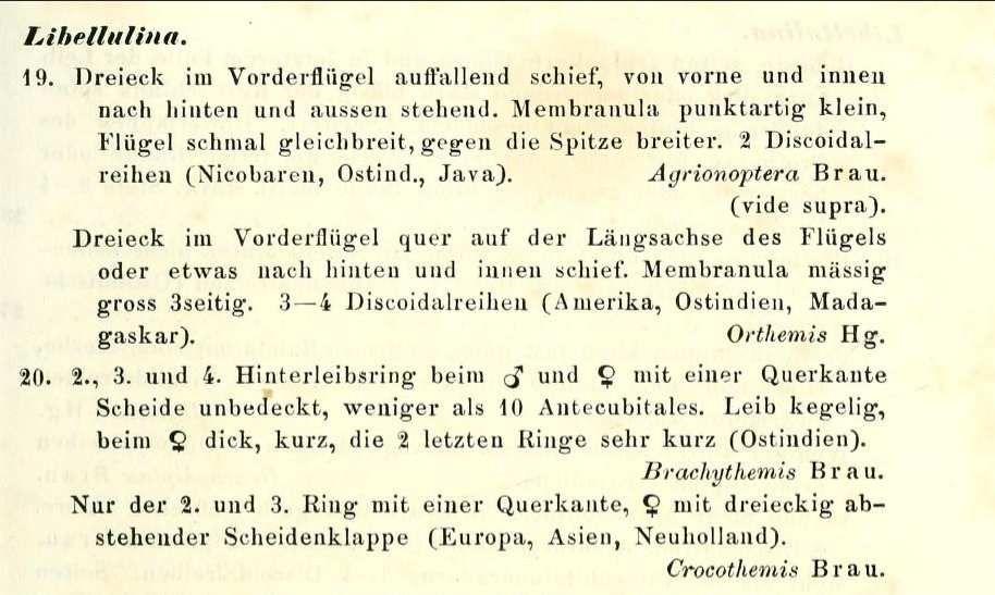 Zoonymie des Odonates. Le nom de genre Crocothemis  Brauer, 1868.