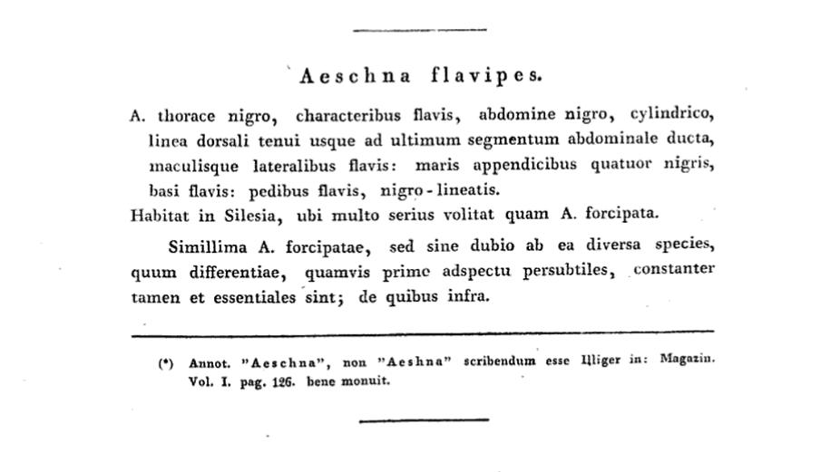 Zoonymie des Odonates : étude des noms du Stylurus flavipes, Charpentier 1825.