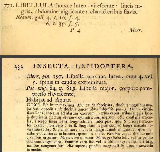 Zoonymie (étude du nom) de Onychogomphus forcipatus Linnaeus, 1758.
