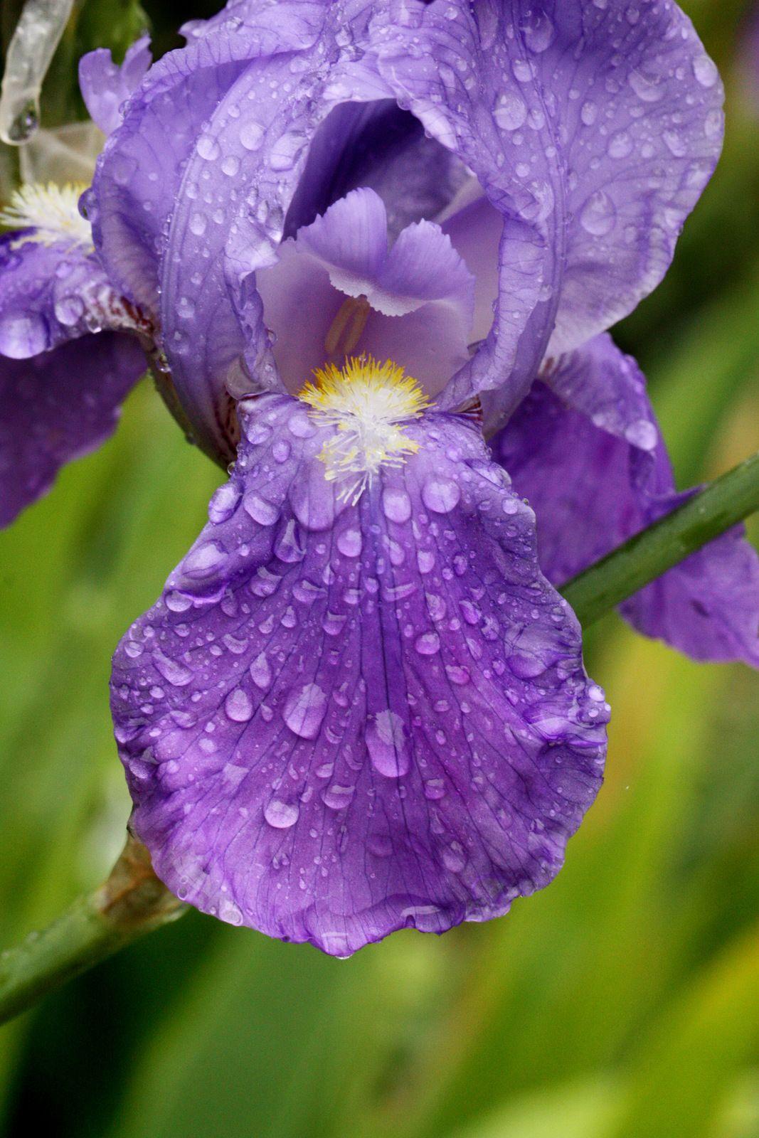 Sourires de la pluie à Crozon. Photographie lavieb-aile 28 avril 2020.