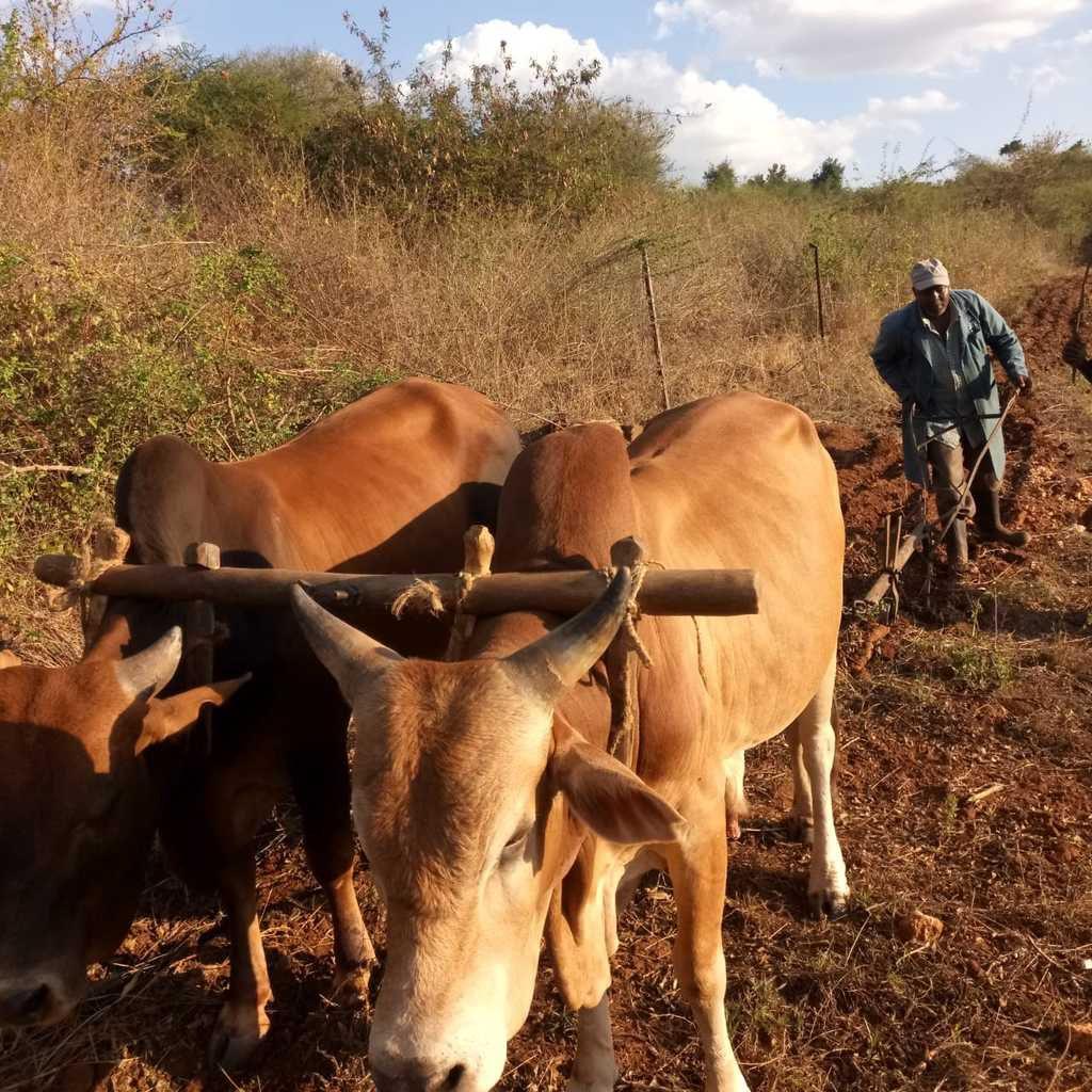 LA CABANE AU KENYA...