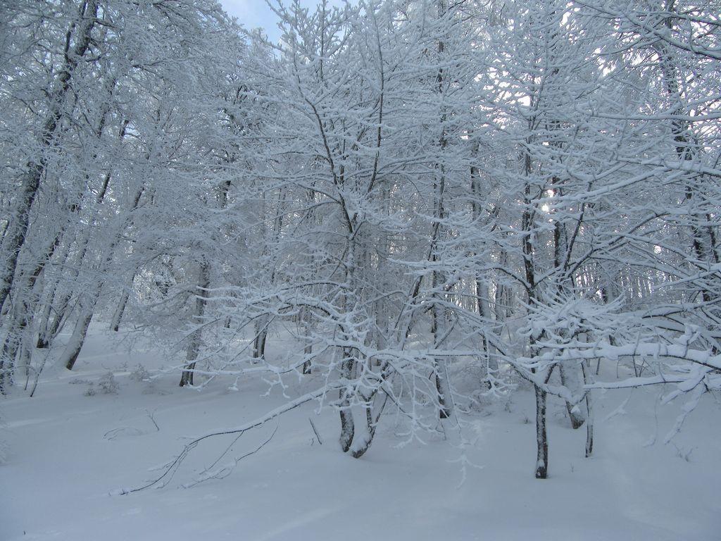 Forêt paisible, neige poudreuse , c'est le pied ...