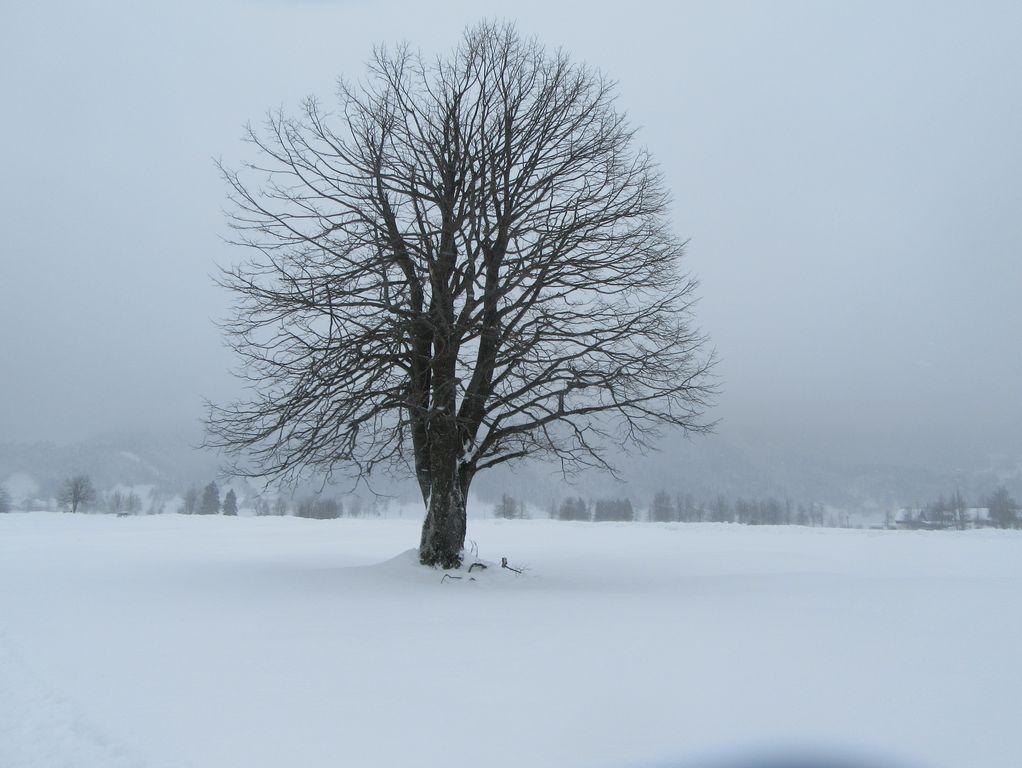 Sneg (neige en slovène)