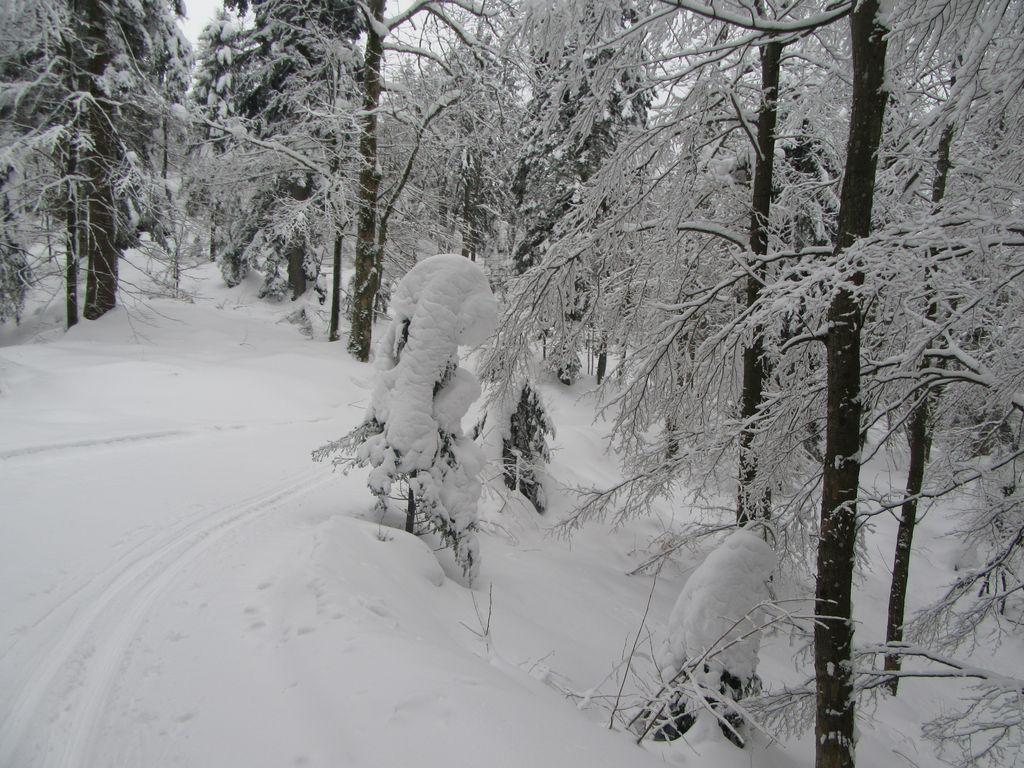 Snow-vénie à skis de fond : les grandes traversées du Sud.