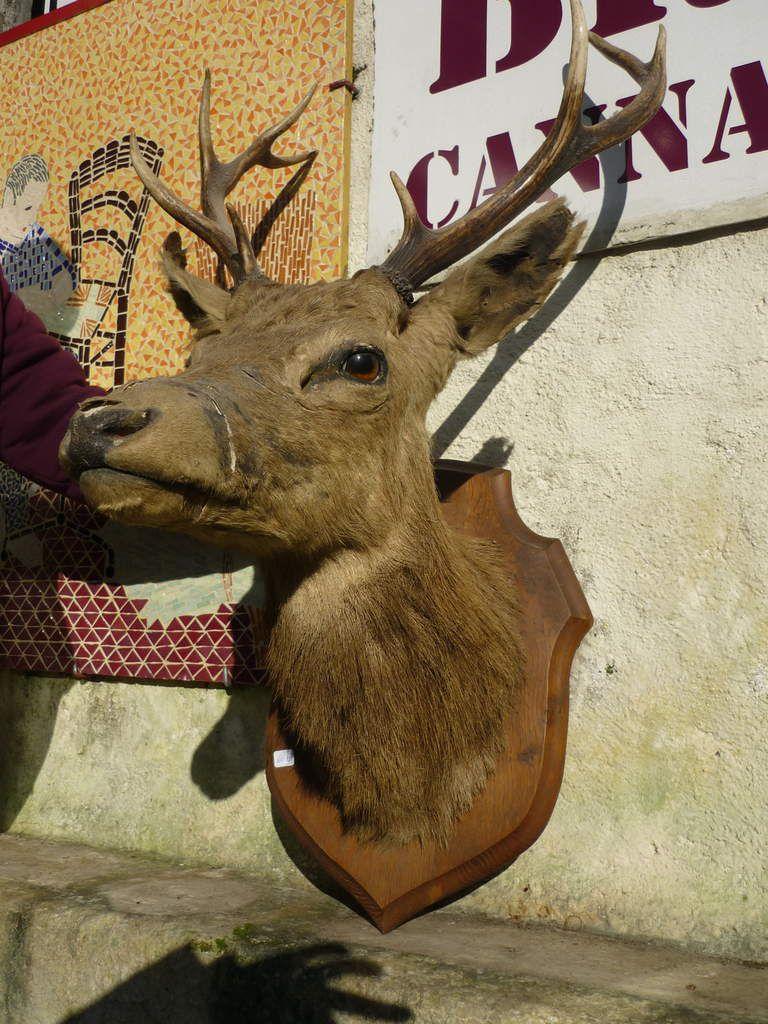 tête de cerf naturalisée à vendre