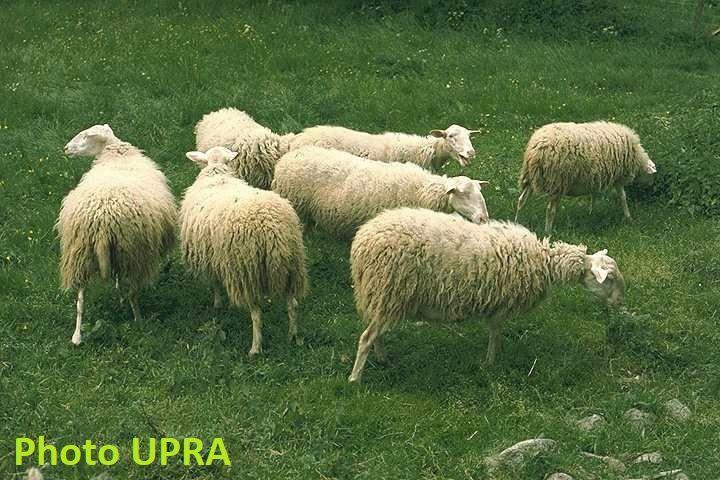 Photos wikipedia Eponym et UPRA