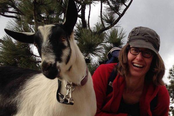 Parlons des chèvres de mon amieNET Lisa.