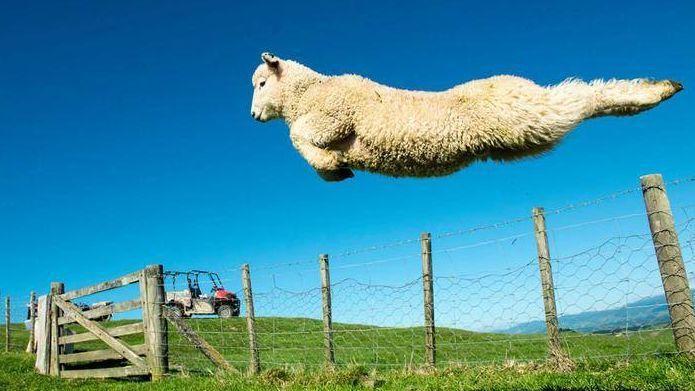JEU des 100 moutons