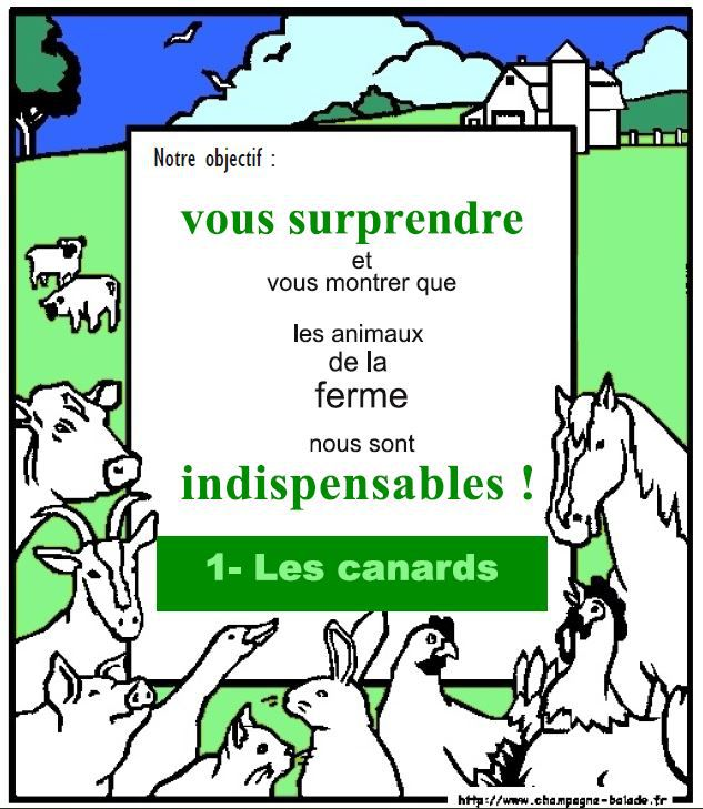 Indispensables canards