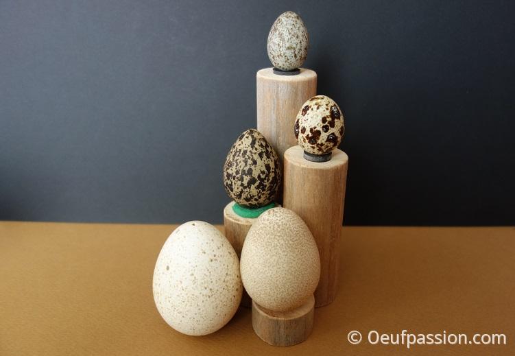 Couleurs des œufs (2)