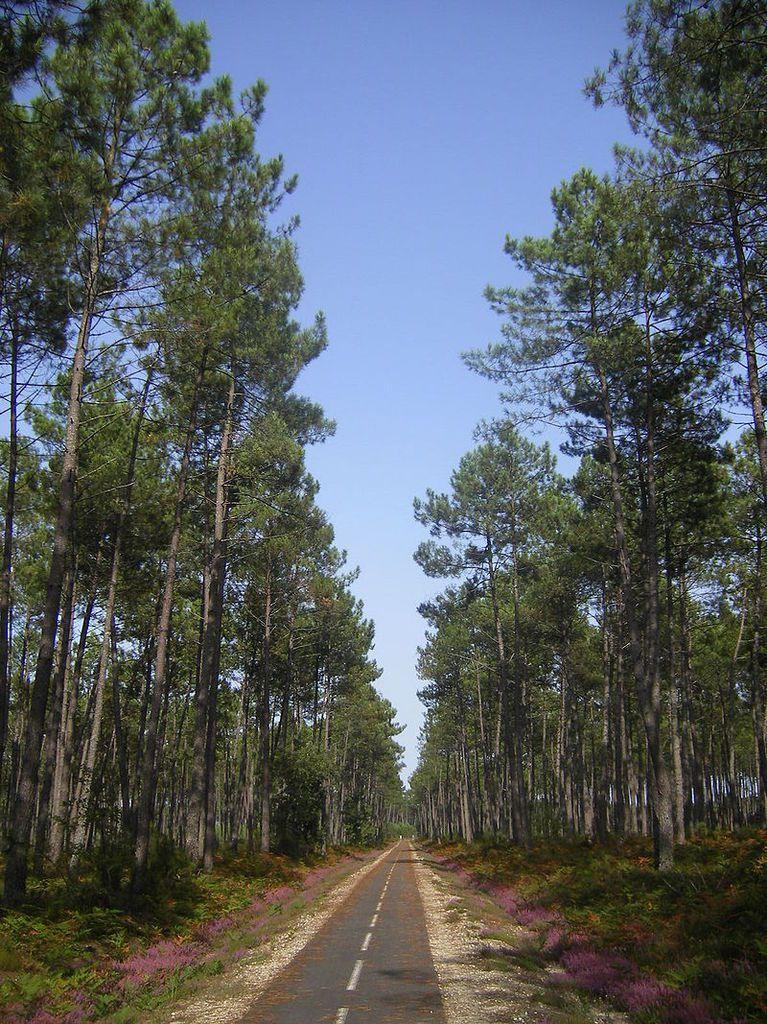 TRESORS DU PATRIMOINE FRANCAIS : LA FORET DES LANDES