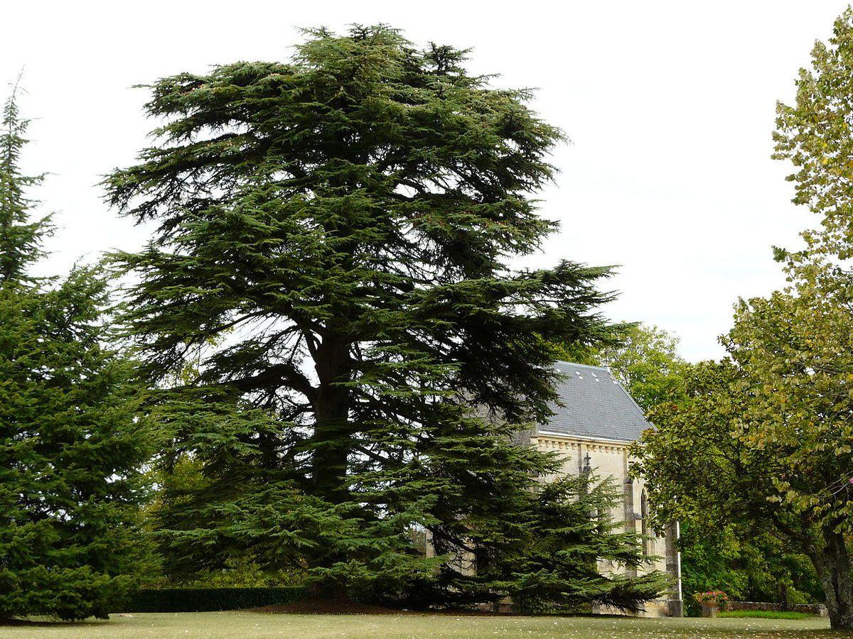 TRESORS DU PATRIMOINE FRANCAIS : MOUZENS  (DORDOGNE) - LE CHATEAU DE MONSEC