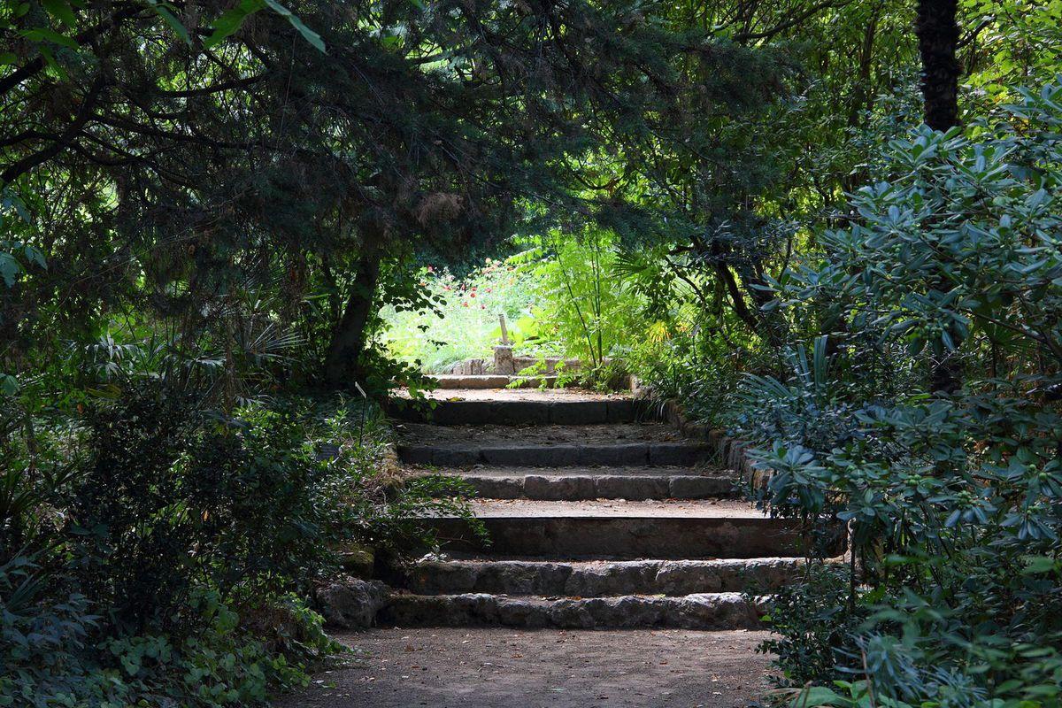 TRESORS DU PATRIMOINE FRANCAIS : MONTPELLIER  (HERAULT) - LE JARDIN DES PLANTES