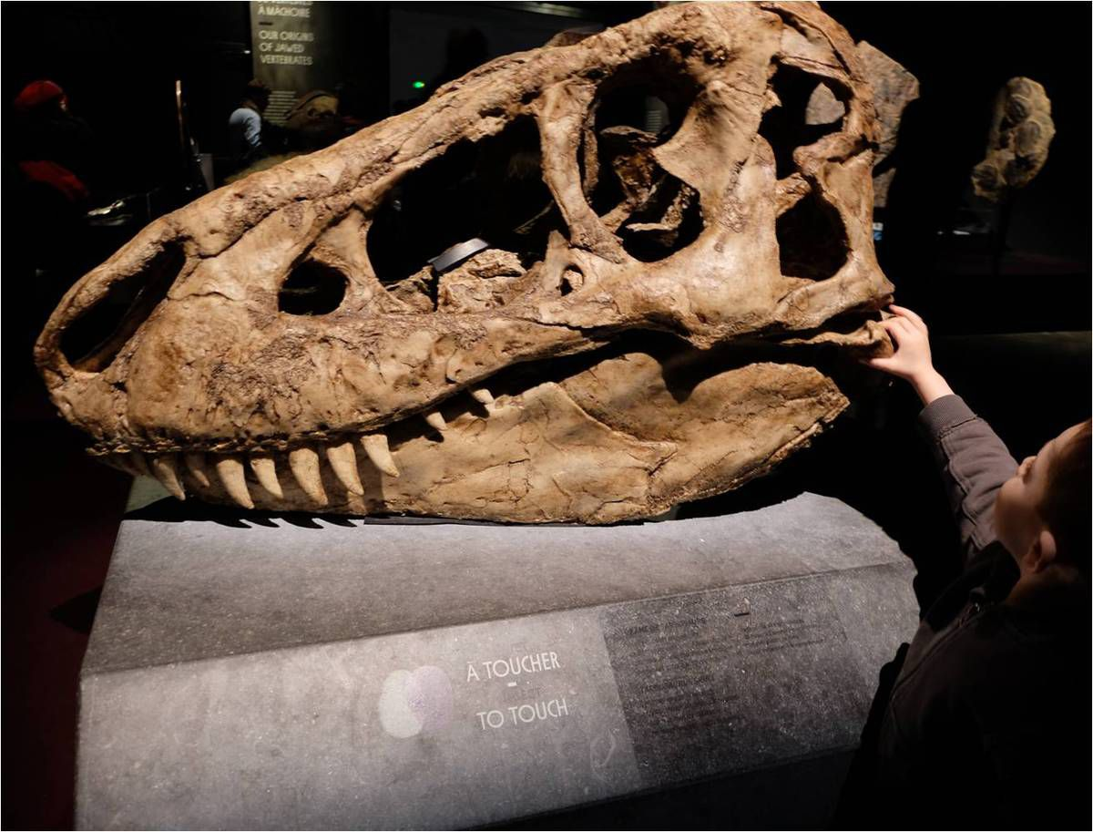 Gros succès du squelette à toucher ! Voilà un musée qui pense aux enfants !