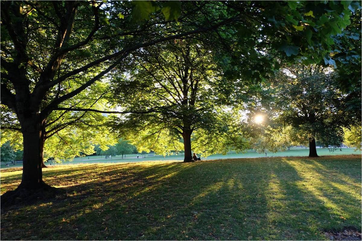 Le charme des parcs anglais...