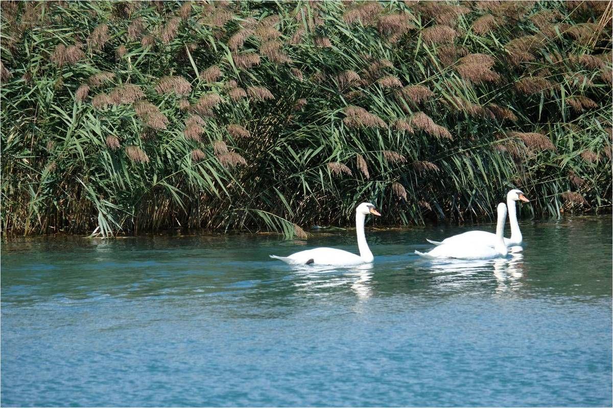 La Navette du Canal de Jonage