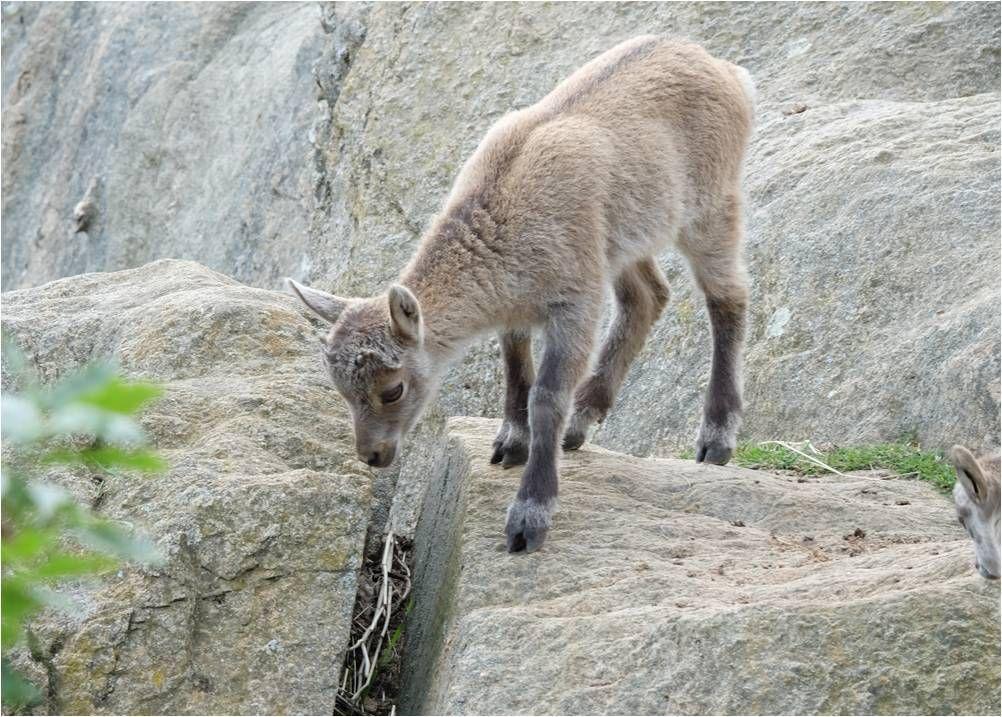 En immersion au Parc Animalier d'Auvergne
