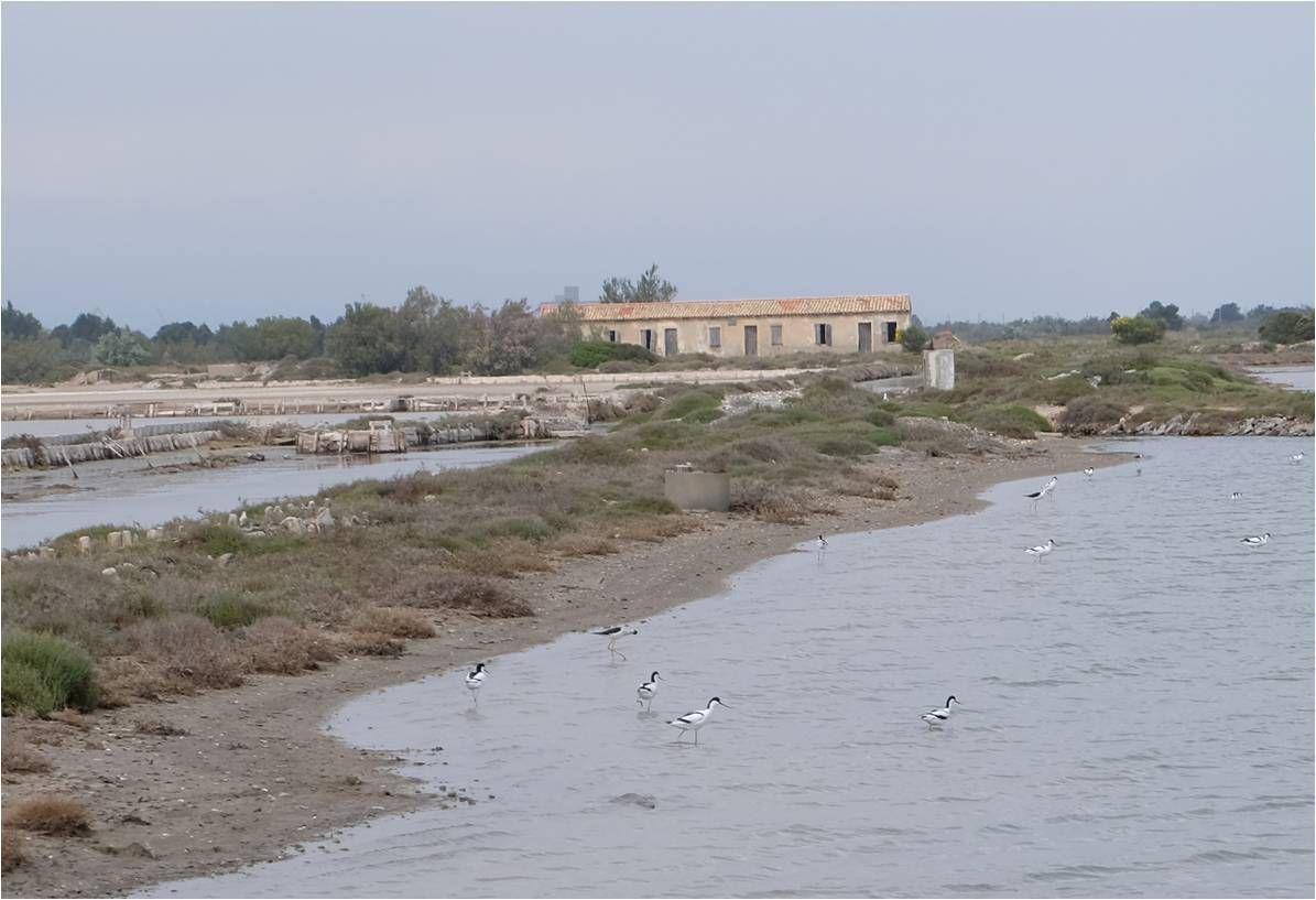 Visite du Salin de la Palme : découvrir la production de sel !