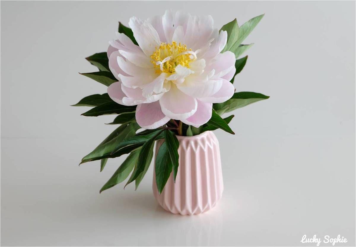 Astuces pour conserver ses bouquets de fleurs