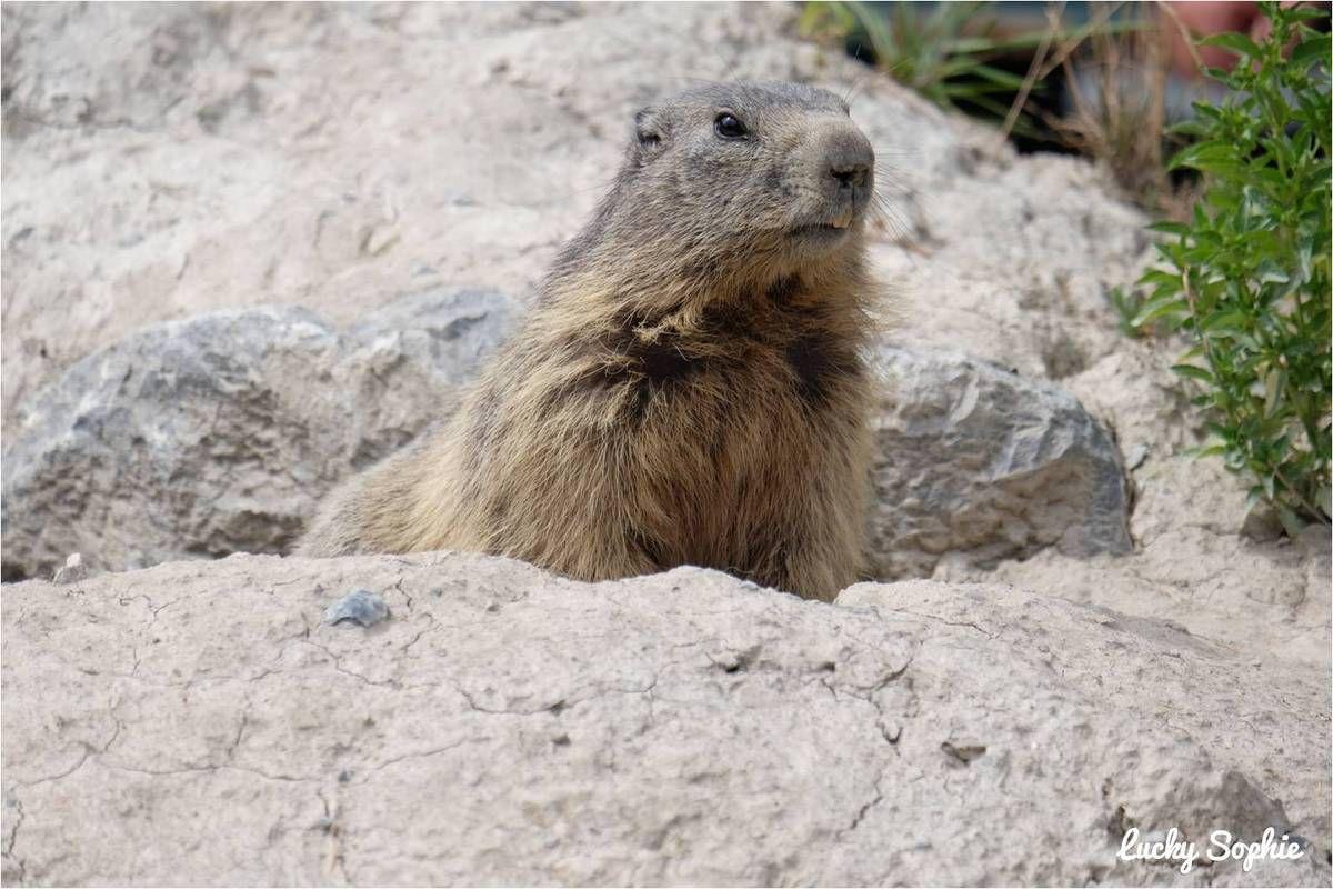 Le parc animalier de Serre-Ponçon