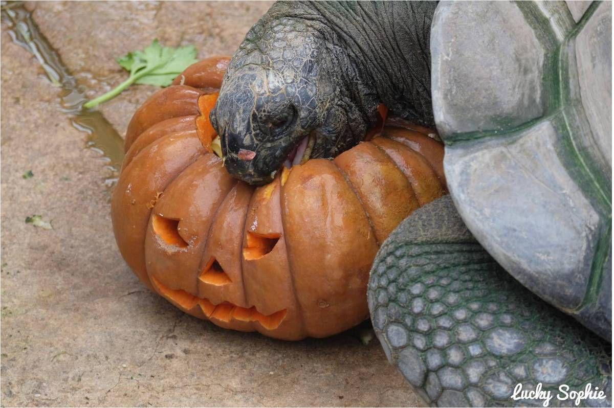 Halloween à la ferme aux crocodiles