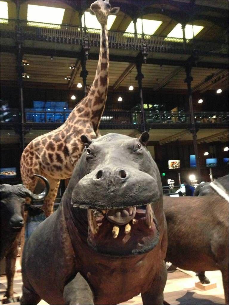 On peut observer de près la bouche de l'hippopotame et même faire une grimace au rhinocéros sans risque de représailles !