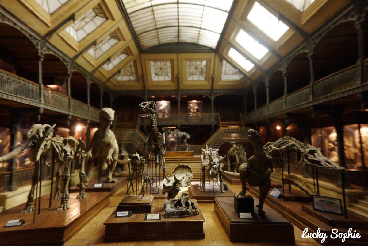 La vitrine miniature du museum d'histoire naturelle.