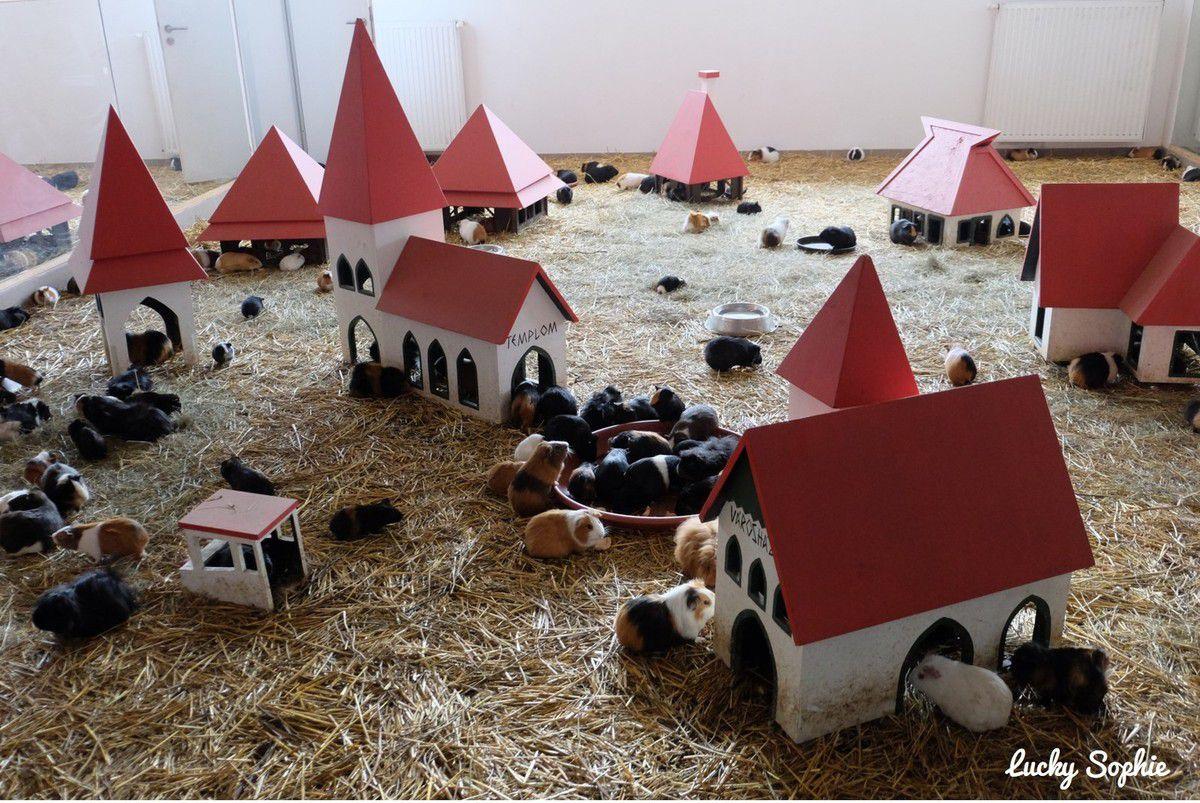 Même les hamsters ont droit à leur village !