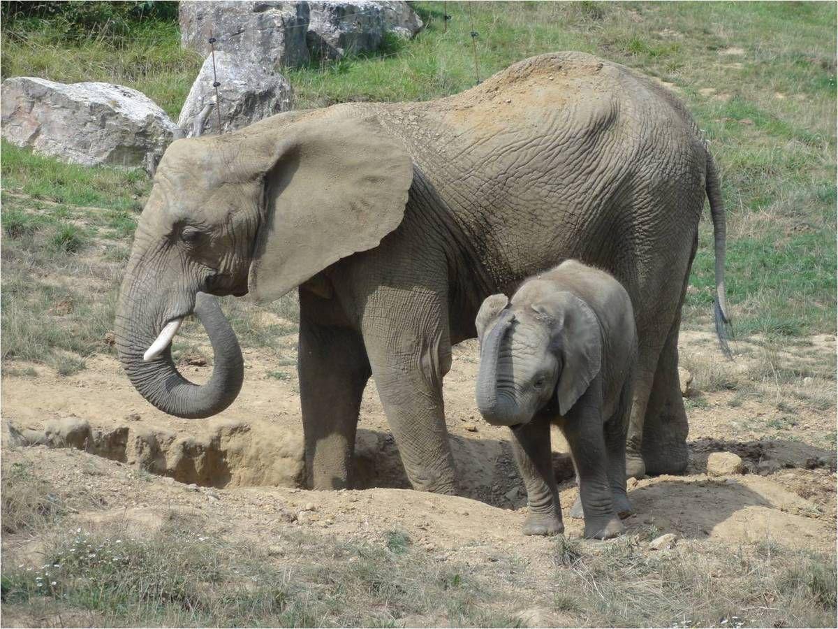 Le zoo de Beauval ? Oui c'est géant, et pas que pour les pandas !