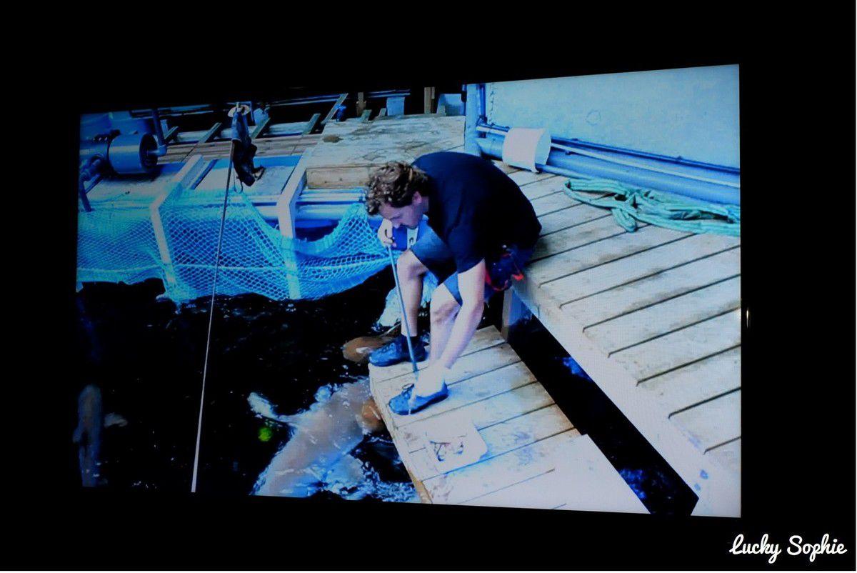 Dans le parcours de visite, une vidéo montre toutes les étapes du nourrissage des requins en haut de la fosse, là où le public ne peut accéder pour des raisons de sécurité.