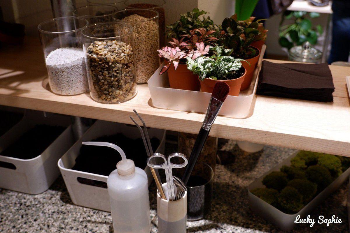 Un atelier terrarium chez Onno Lyon
