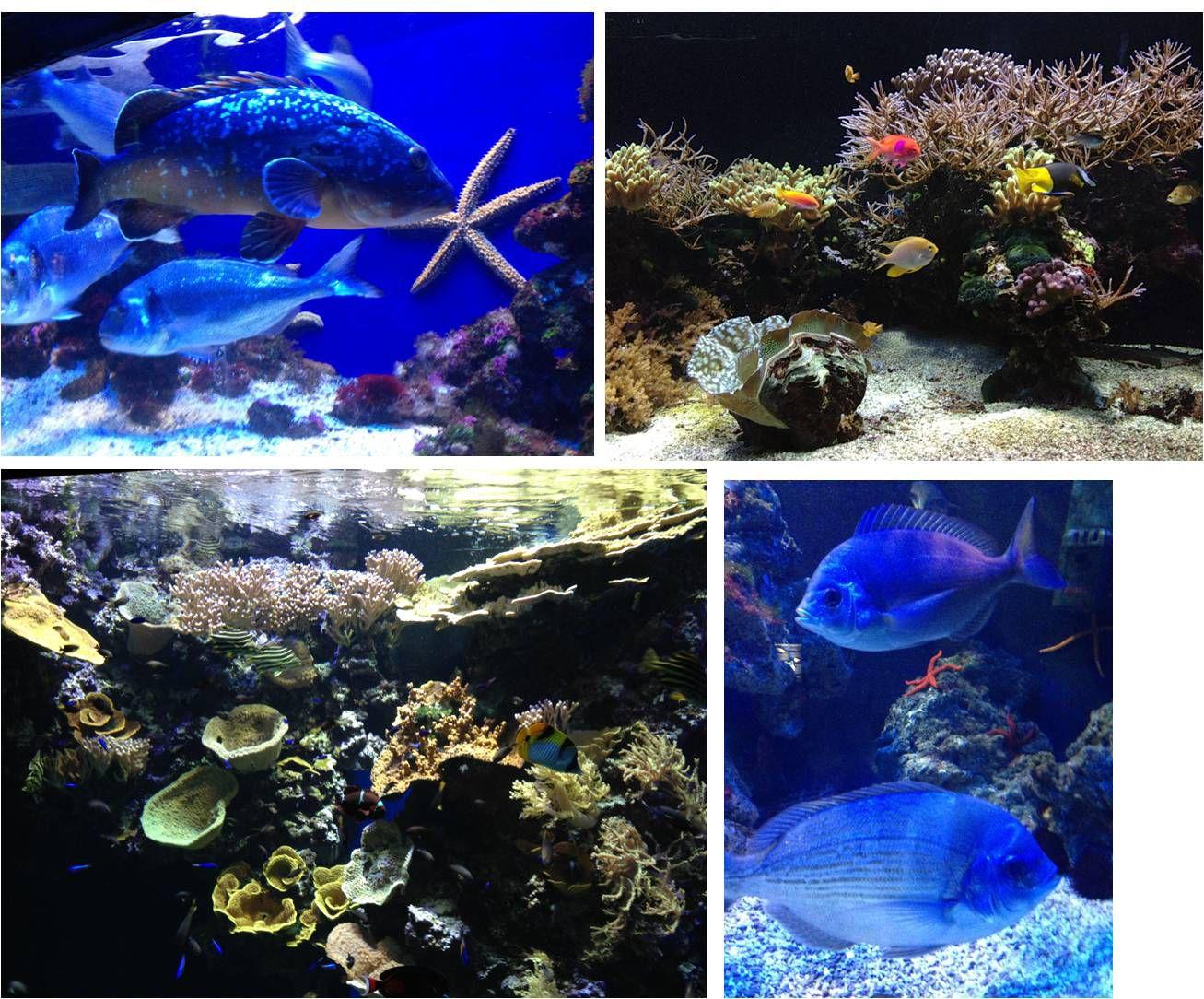 Aquarium princier : Musée Océanographique de Monaco !