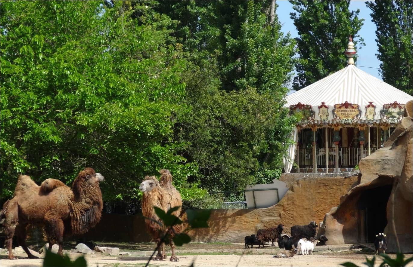 Touroparc, zoo et attractions à 45 minutes de Lyon