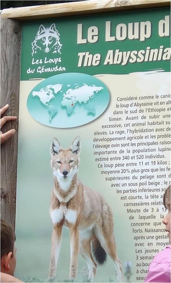 Au Parc des Loups du Gévaudan