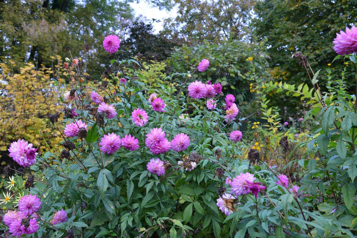 Encore un peu de fleurs au jardin ...