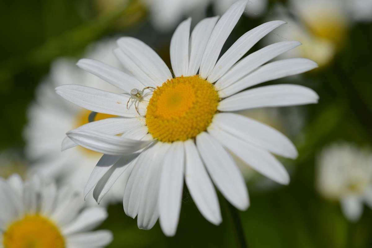 Le retour des coléoptères et de leurs prédateurs ...